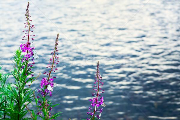Lila virágok fehér pillangók folyó víz Stock fotó © TasiPas