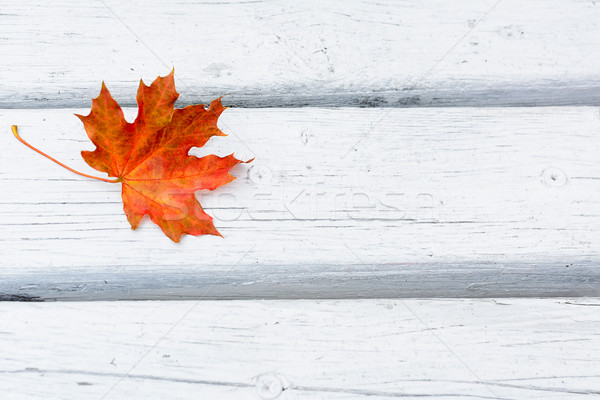 Fall maple leaf on white wooden background Stock photo © TasiPas