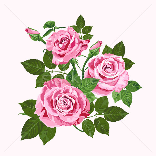 Pink roses bouquet isolated on the white Stock photo © TasiPas