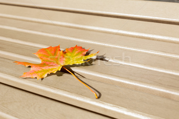 Last fall leaf as loneliness concept. Stock photo © TasiPas