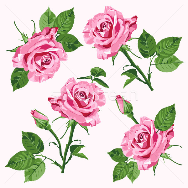 Pink vector roses and leave seamless pattern Stock photo © TasiPas