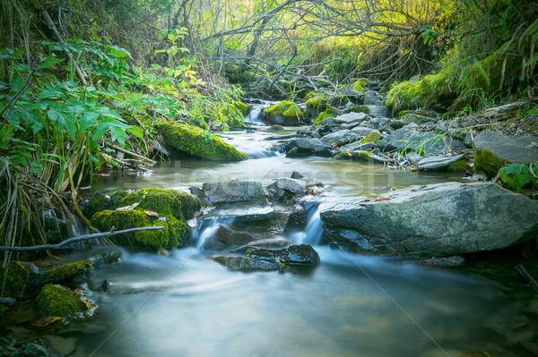 Gyönyörű tájkép erdő patak vízesés víz Stock fotó © TasiPas