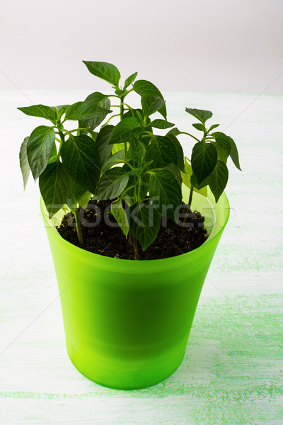 Young plants in plant pot, vertical Stock photo © TasiPas