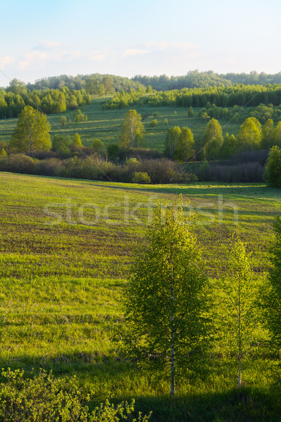Beautiful hills landscape, vertical Stock photo © TasiPas