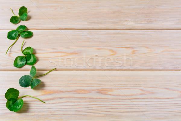 Three-leaves clover on wooden background Stock photo © TasiPas