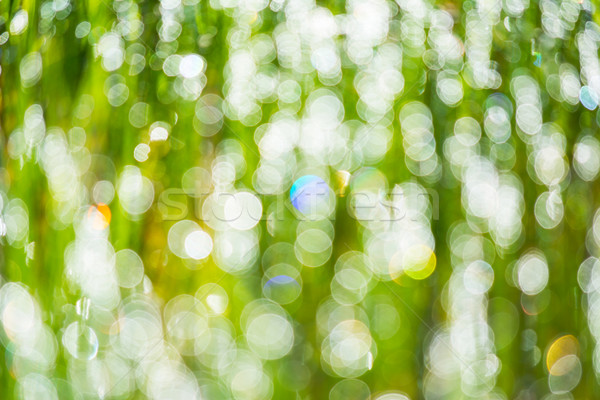 Defocused morning dew on the grass Stock photo © TasiPas