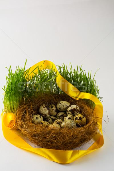 Vad madár tojások fészek friss zöld fű Stock fotó © TasiPas