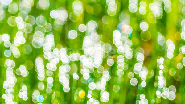 薄緑 ぼけ味 緑 ぼやけた テクスチャ 春 ストックフォト © TasiPas