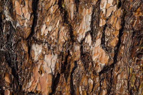 Rot Kiefer Rinde Textur Baum abstrakten Stock foto © TasiPas