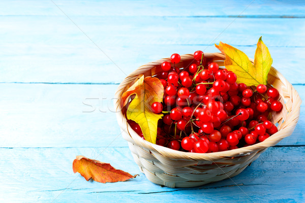 Red forest berries in wicker basket on blue wooden background Stock photo © TasiPas