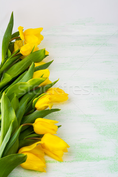 黄色 チューリップ 薄緑 垂直 コピー ストックフォト © TasiPas