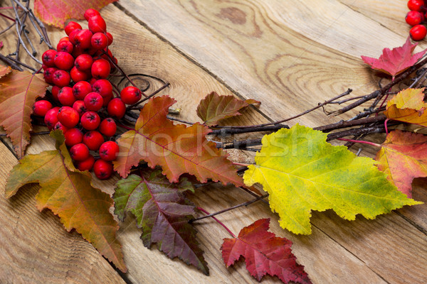 Thanksgiving background with leaves and ripe berries, close up Stock photo © TasiPas