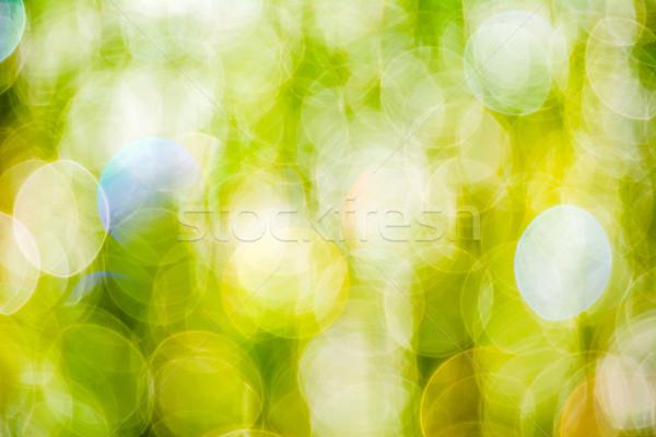 Sun beams on meadow grass blurred bokeh background  Stock photo © TasiPas