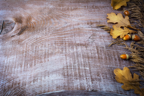 Thanksgiving background with oat, acorn and fall leaves Stock photo © TasiPas