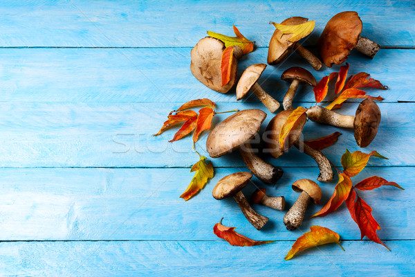 Thanksgiving or fall background with forest mushrooms and fall l Stock photo © TasiPas