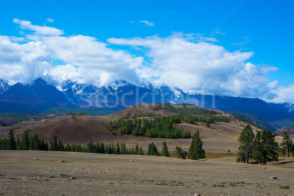 Aktru glacier Altay mountains  Stock photo © TasiPas