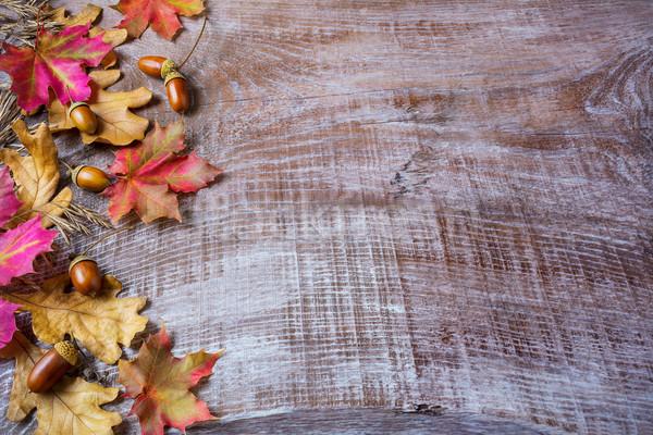 Ringraziamento ghianda caduta foglie legno copia spazio Foto d'archivio © TasiPas