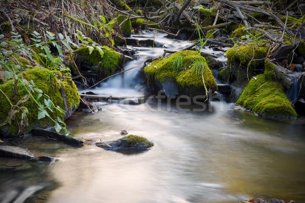 красивой пейзаж лес ручей воды потока Сток-фото © TasiPas