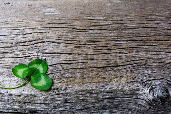 St. Patrick day greeting card with three-leaves clover Irish fes Stock photo © TasiPas