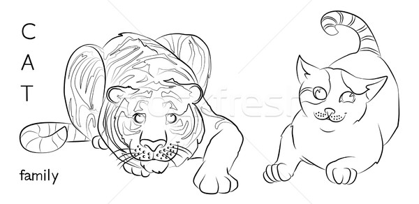 black and white image of a cat and tiger Stock photo © tatiana3337