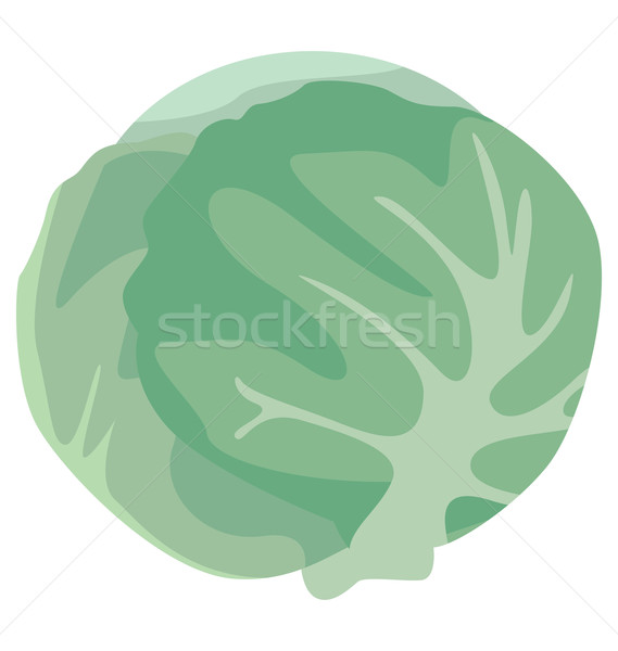 head of cabbage Stock photo © tatiana3337
