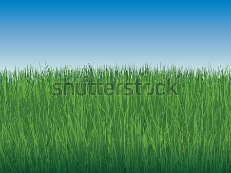 Céu grama verde maravilhoso verde gramado sem nuvens Foto stock © tatiana3337