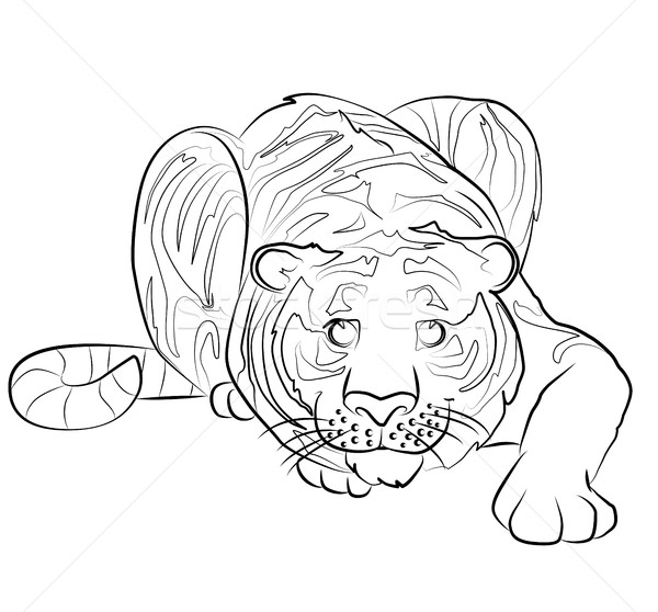 Stock photo: black and white image of a tiger