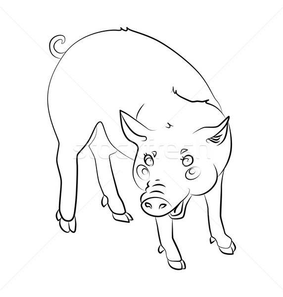 Döngü neşeli domuz can kullanılmış Stok fotoğraf © tatiana3337