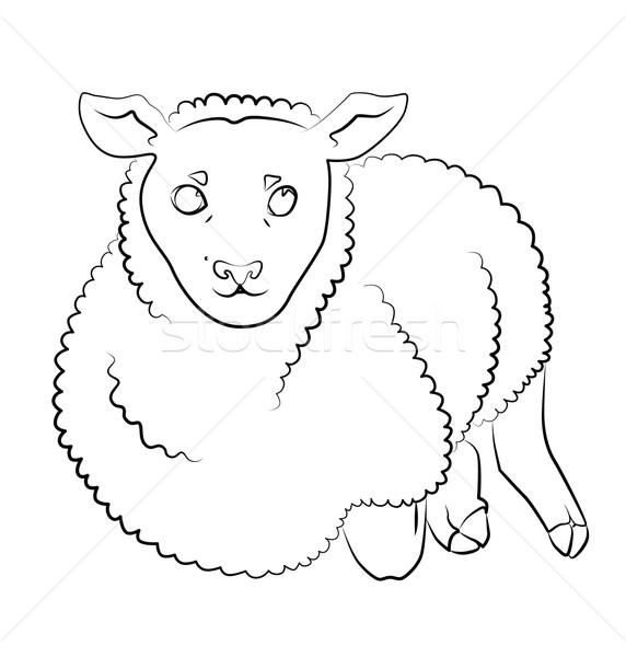 black and white image of a sheep Stock photo © tatiana3337