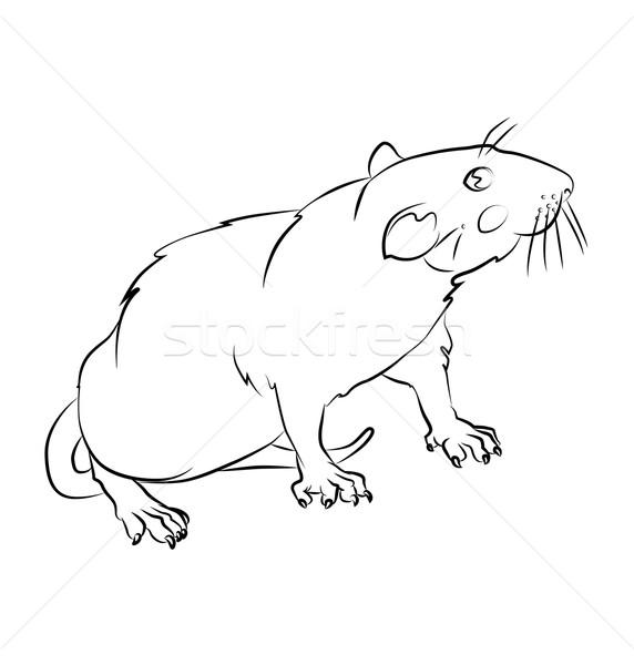 Feketefehér patkány kép tökéletes könyvek nem Stock fotó © tatiana3337