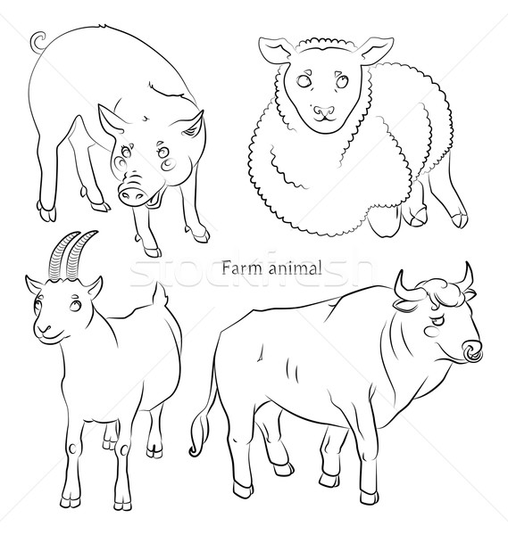 black and white image of a bull, pig, sheep and goat Stock photo © tatiana3337
