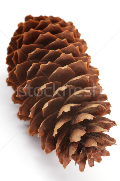pinecone Stock photo © Tatik22