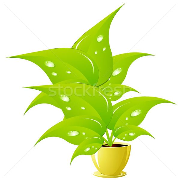 Green flower in a yellow flower pot Stock photo © Tatik22