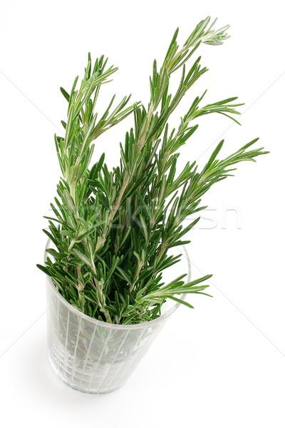 Biberiye yaprak sağlık yeşil bitki pişirme Stok fotoğraf © Tatik22