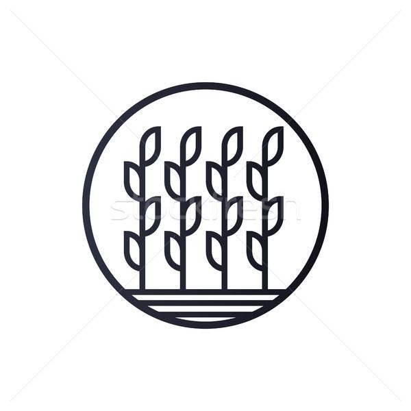 Trigo logotipo modelo vetor ícone projeto Foto stock © taufik_al_amin