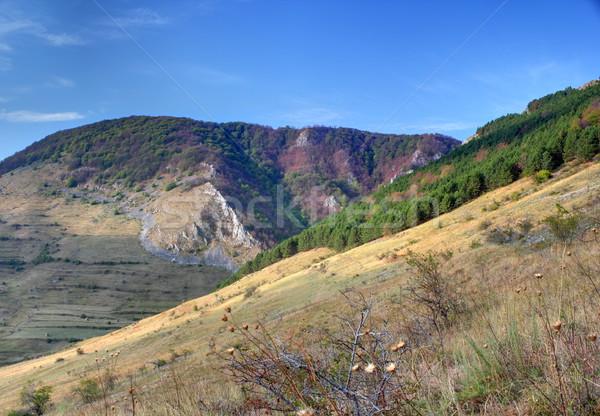 gorges in Trascau mountains Stock photo © taviphoto