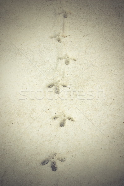 capercaillie tracks on snow Stock photo © taviphoto