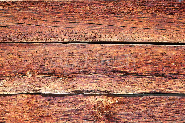 spruce wood showing insect attack Stock photo © taviphoto