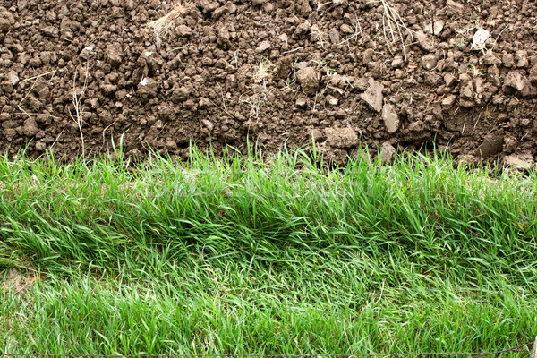 Kontraszt textúrák perem föld zöld fű fű Stock fotó © taviphoto