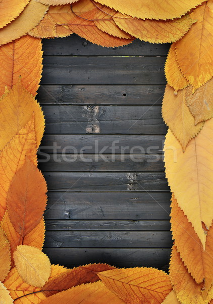 golden leaves frame on burned planks Stock photo © taviphoto