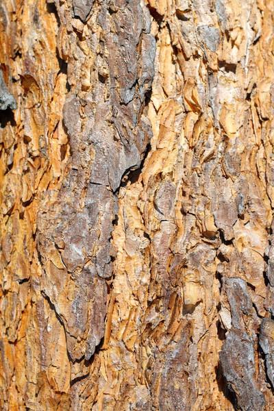 Kleurrijk oude pine schors boomstam hout Stockfoto © taviphoto