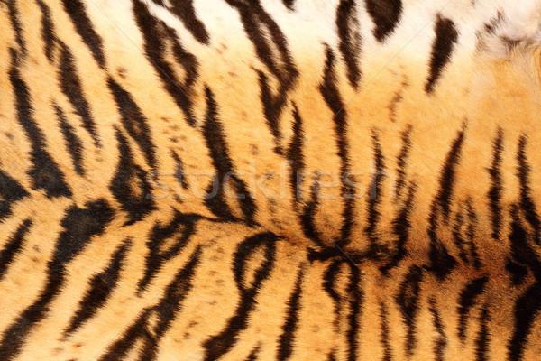 black tiger stripes Stock photo © taviphoto