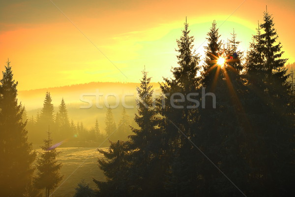 sunrise over mountain forest Stock photo © taviphoto