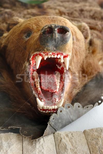 Bruine beer trofee bergen natuur spel mannelijke Stockfoto © taviphoto