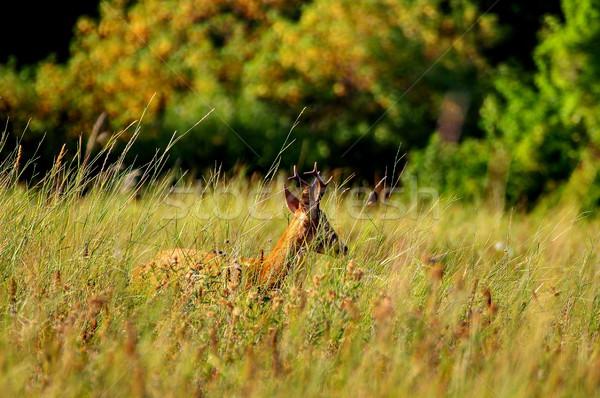 Escondido grande grama laranja cor Foto stock © taviphoto