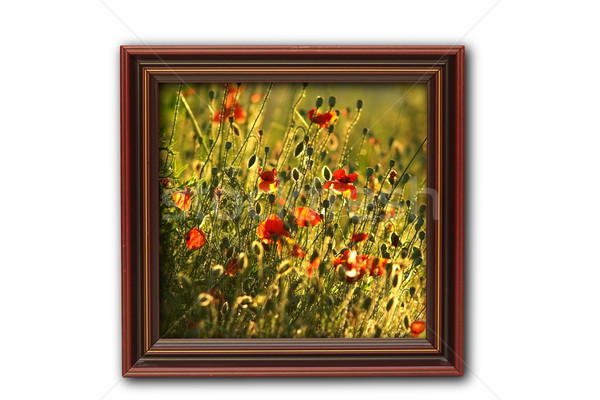 image with poppies on wood frame Stock photo © taviphoto
