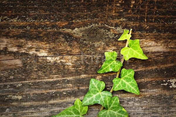 Vert lierre croissant bois clôture sauvage Photo stock © taviphoto
