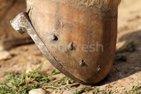 detail of a mounted horseshoe Stock photo © taviphoto