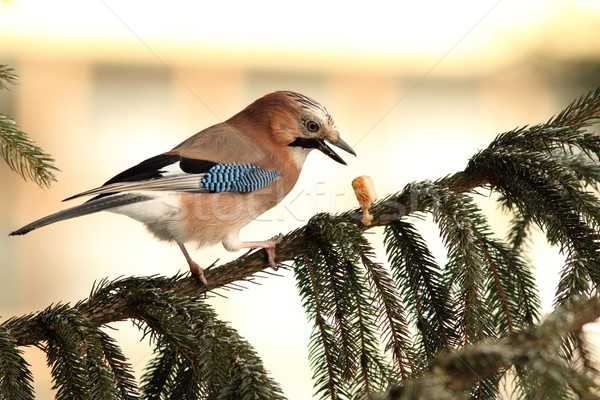 Alimentos pico pie ataviar árbol naturaleza Foto stock © taviphoto