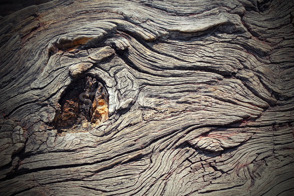 knot on real oak wood Stock photo © taviphoto